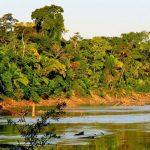 Tropical Lowland Evergreen Forest Habitat