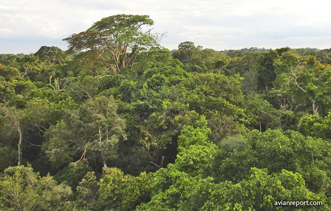 Tropical Lowland Evergreen Forest Habitat Avian Report Welcome to the tropical evergreen broadleaf forest biome. avian report