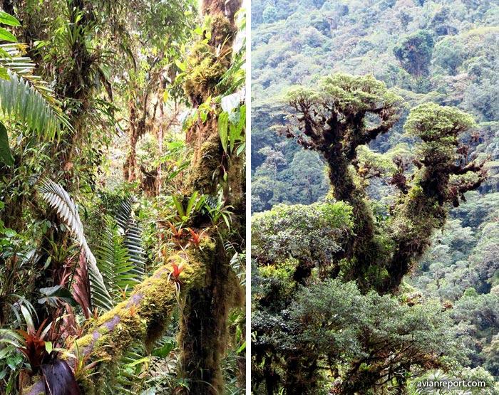 bromelias-moss_Montane Evergreen Forest