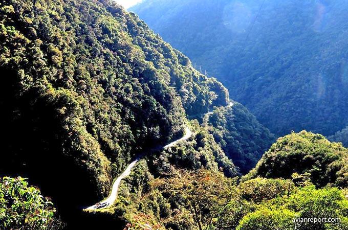 montane evergreen forest