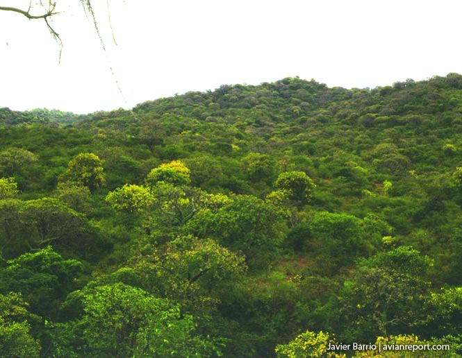 lush-Tropical Deciduous Forests