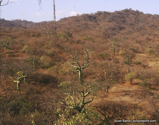 dry-Tropical Deciduous Forests