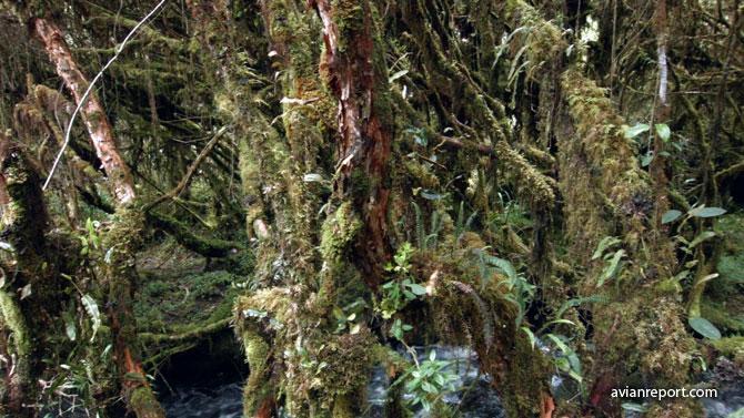 interior_elfin-forest