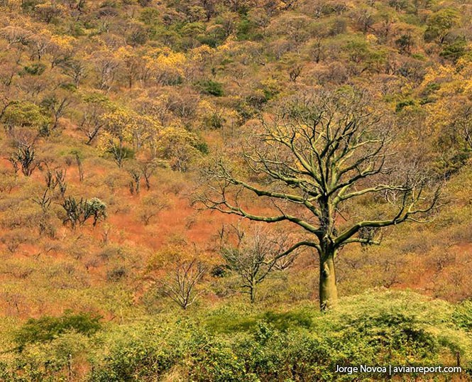tropical-deciduous-forest