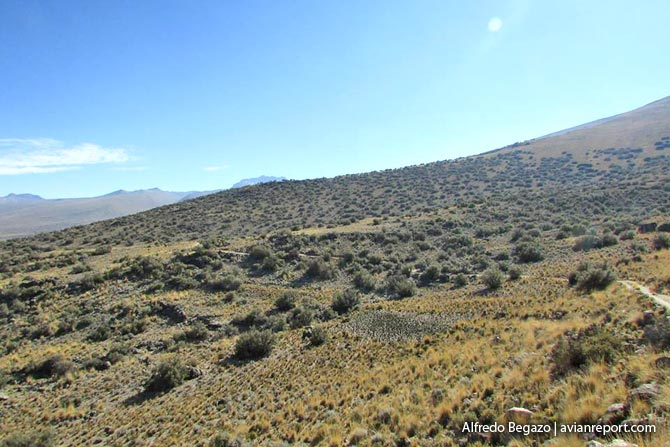 dwarf_Polylepis Woodlands