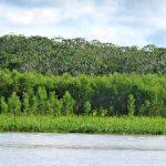 river created habitats