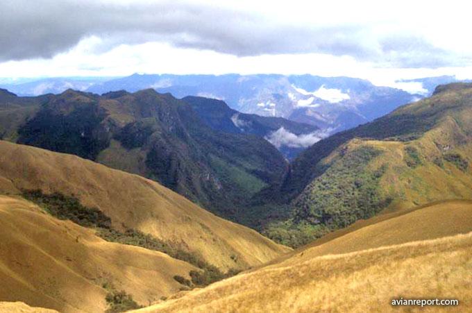 upper_limit_montane Evergreen Forest