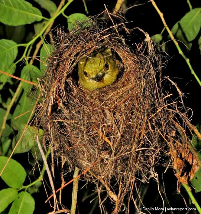 nests of birds_spherical