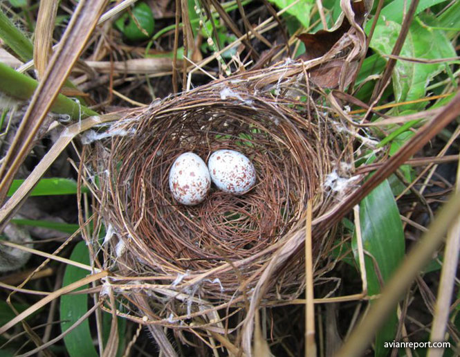 nests of birds_bowl