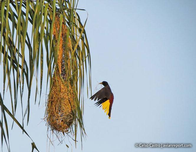 nests of birds_nest hanging